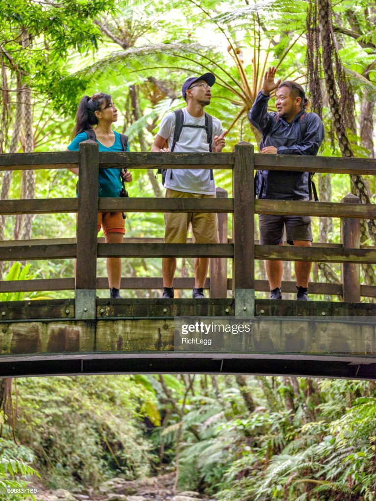 Exploring a Tropical Rainforest in Okinawa Japan : Stock Photo