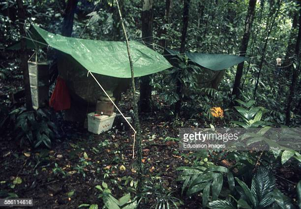 Exploring for establishing Arnold Newman's Cathedral Rain Forest Science Preserve Osa Peninsula Costa Rica 1973