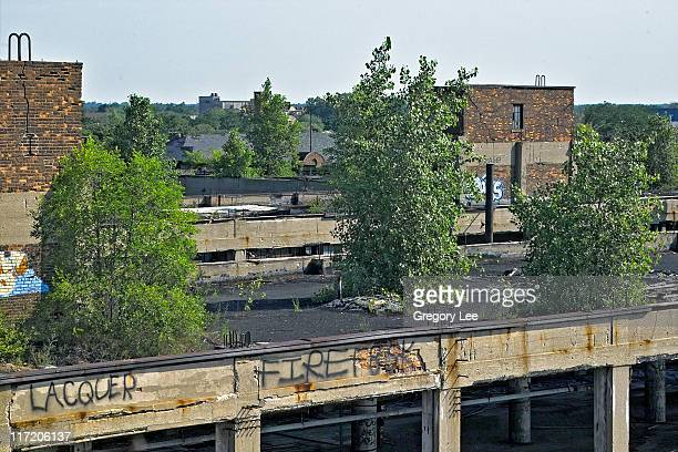 Exploring the abandoned Packard Plant, Detroit, Michigan. The trees take root in the concrete roof. Over time, the roots break apart the concrete and...