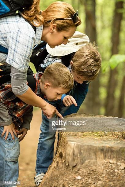Exploring the nature, looking at tree stump