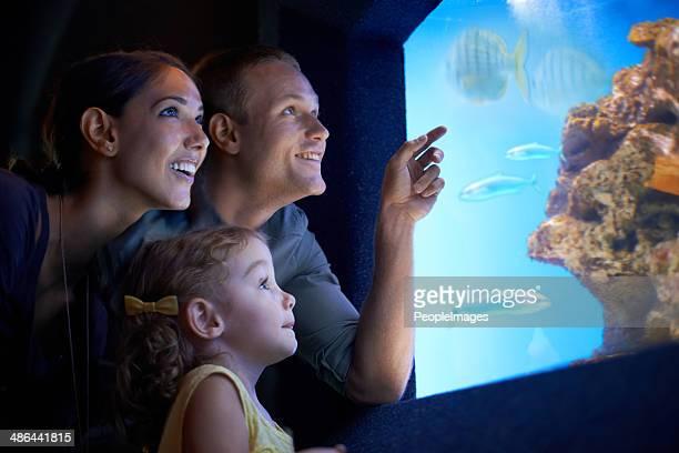 Explorer le monde sous-marin