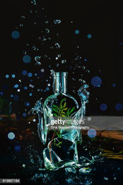 explosion of water splashes and drops inside a broken glass bottle with a green branch inside. spring and gardening still life. the force of nature concept. - penetracion fotografías e imágenes de stock