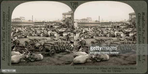 Exporting Wheat at Odessa on the Black Sea, the Ukraine, Stereo Card, Keystone View Company, early 1900's.