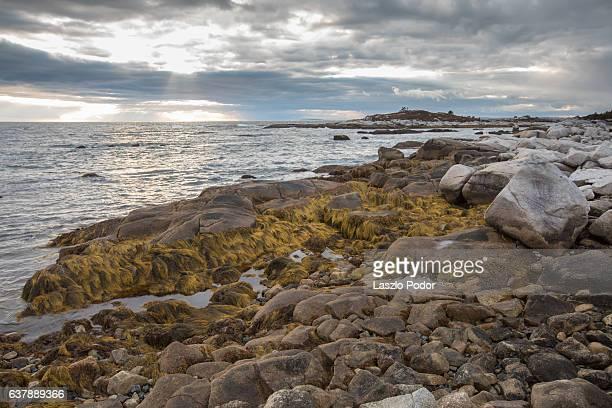 Expose seaweed at low tide