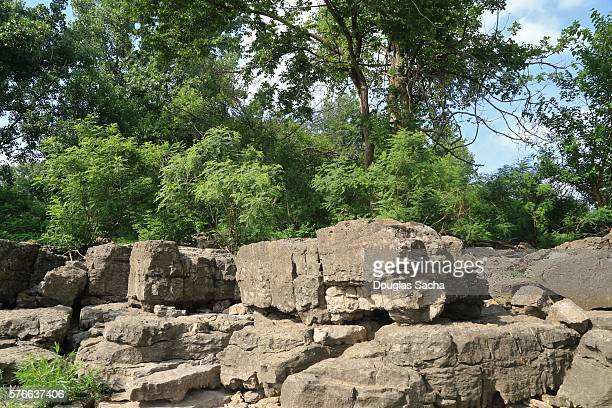 Exposed fossil beds at Falls of the Ohio State Park, Clarksville, Indiana, USA