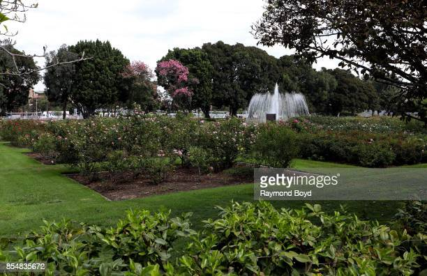 Exposition Park Rose Garden Stock Photos and Pictures | Getty Images