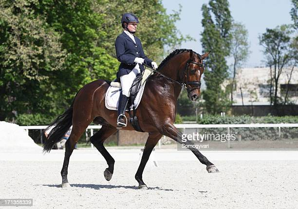 extended trot dressage - equestrian event stock pictures, royalty-free photos & images