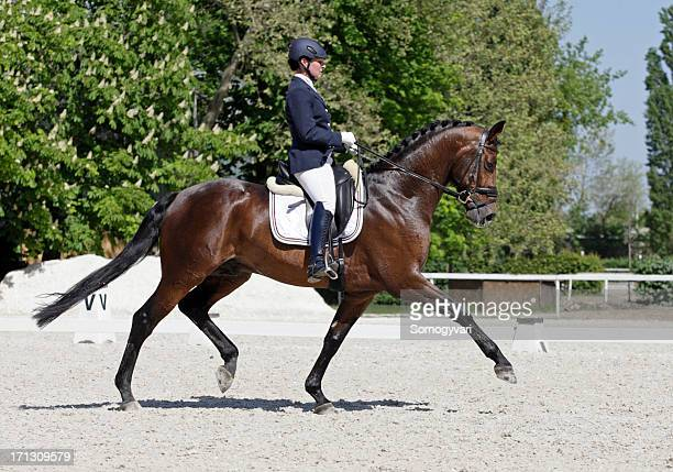 extended trot - equestrian event stock pictures, royalty-free photos & images