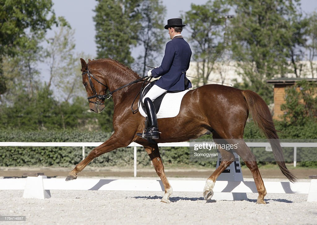 Extended trot : Stock Photo