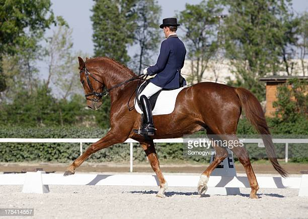 extended trot - dressage stock pictures, royalty-free photos & images