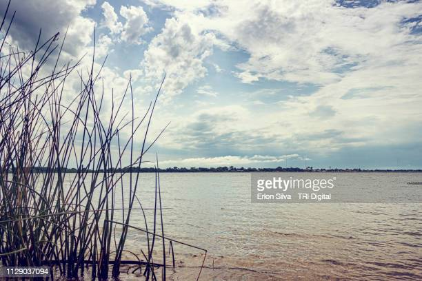 Extension of a river and its archipelagos in the sky line and green reeds brown water