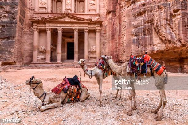 Exterior view of the rock-cut architecture of Al Khazneh or The Treasury at Petra, Jordan, camels in the foreground.