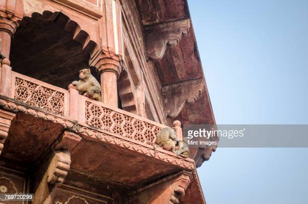 Exterior view of the Taj Mahal palace and mausoleum, a UNESCO world heritage site. Monkeys seated on the balustrade of a tower.