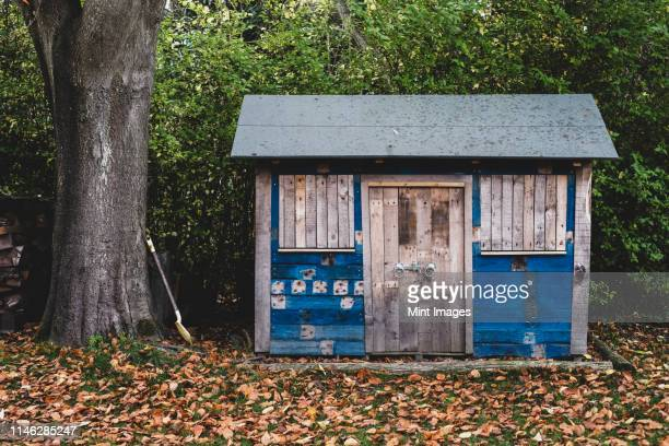 exterior view of wooden shed with blue walls in garden, autumn leaves on lawn. - shed stock pictures, royalty-free photos & images