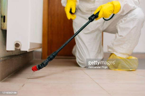 exterminator, hygiene, disinfection - arthropod stock pictures, royalty-free photos & images