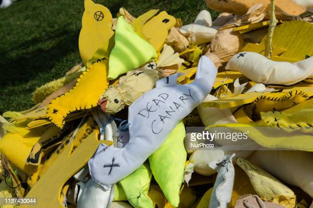 Extinction Rebellion activists created a pile of symbolic 'Dead Canary Emissaries' installation in Parliament Square calling the British government...