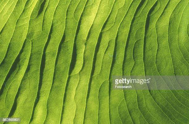 Extreme close up of a leaf