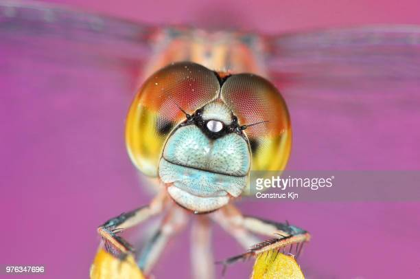 Extreme close up of dragonfly