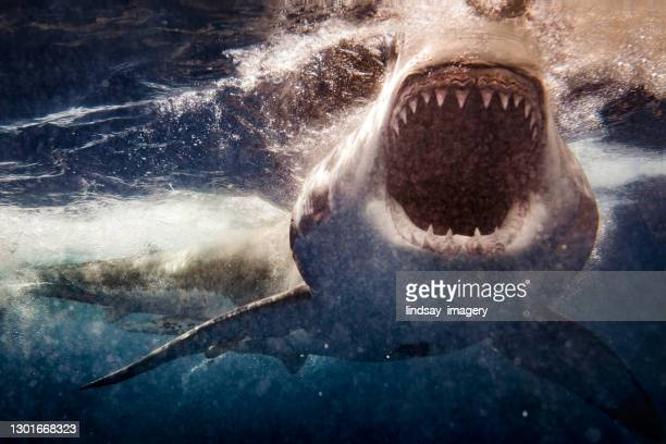 extreme close up of great white shark attack with blood - violence stock pictures, royalty-free photos & images
