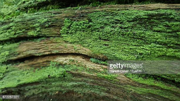 extreme close up of green leaf - moss stock pictures, royalty-free photos & images