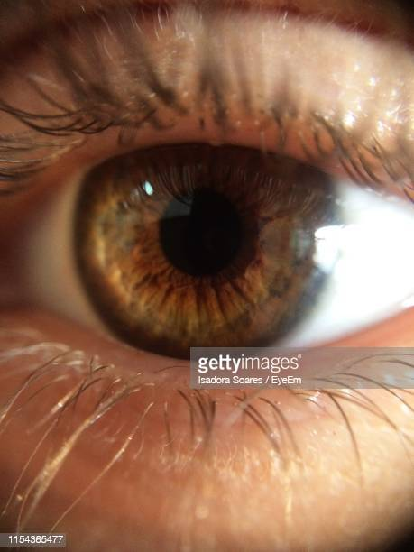 extreme close up of human eye - brown eyes stock photos and pictures