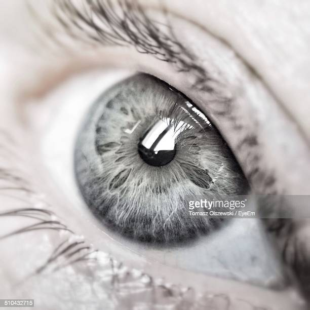 extreme close up of human eye - grey eyes stock pictures, royalty-free photos & images