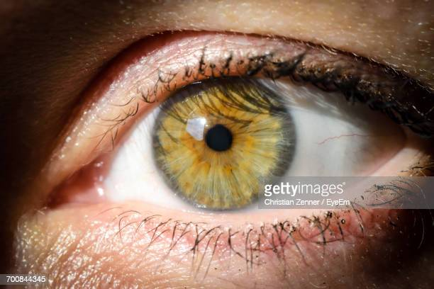 extreme close up of human eye - hazel eyes stock pictures, royalty-free photos & images