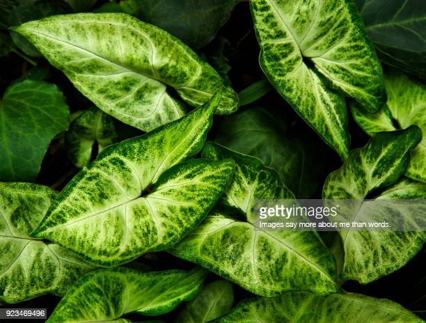 Extreme close up of leaves and their amazing patterns.
