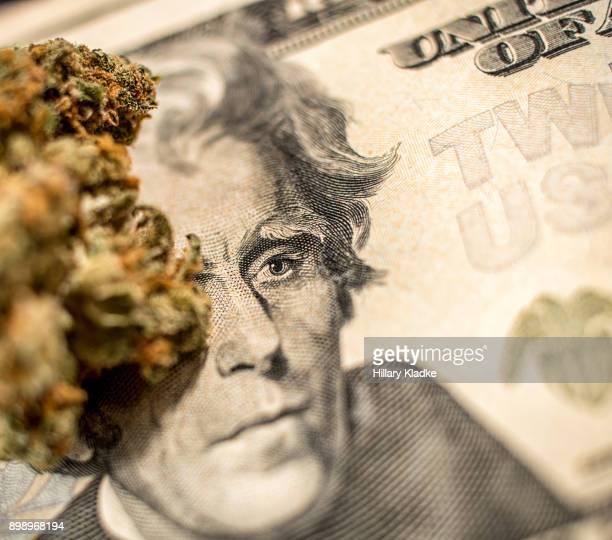 extreme close up of marijuana on money - marijuana money stock photos and pictures