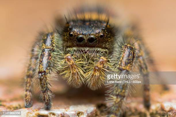 extreme close up of spider - ugly spiders stock photos and pictures