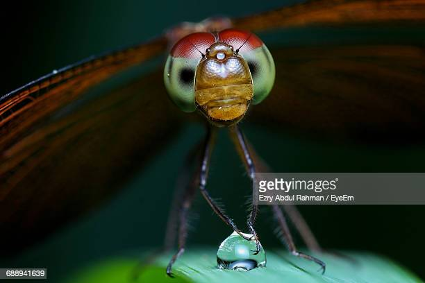 extreme close-up dragonfly on plant - bug eyes stock photos and pictures