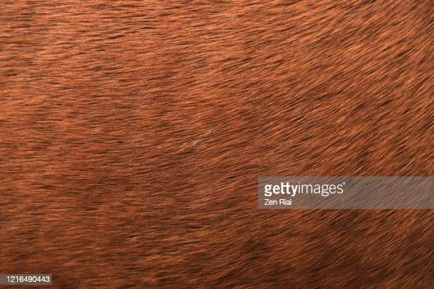 extreme close-up of a brown horse's hair - animal hair stock pictures, royalty-free photos & images