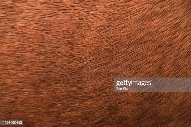 extreme close-up of a brown horse's hair - fourrure photos et images de collection