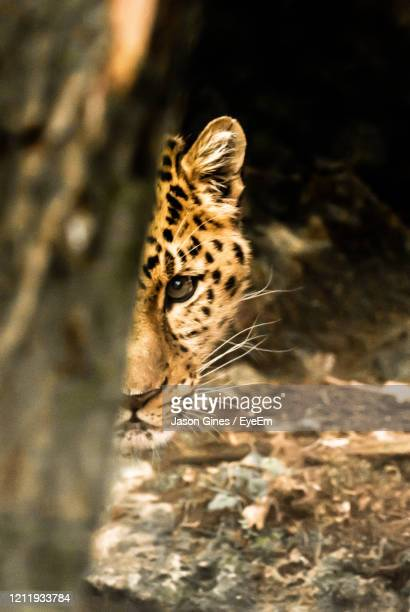 extreme close-up of a cat - animals in the wild stock pictures, royalty-free photos & images