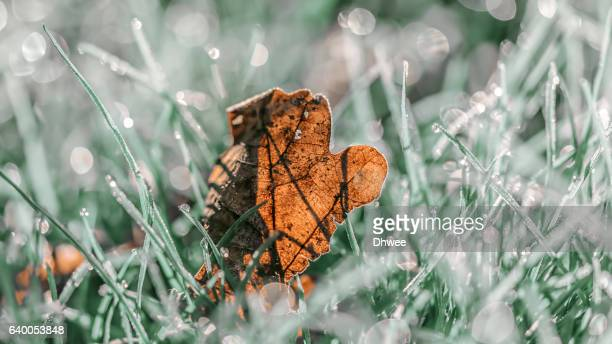 Extreme Close-Up Of A Frozen Brown Leaf On Grass