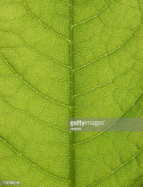 extreme detalhe de folha - folha de bambu - fotografias e filmes do acervo