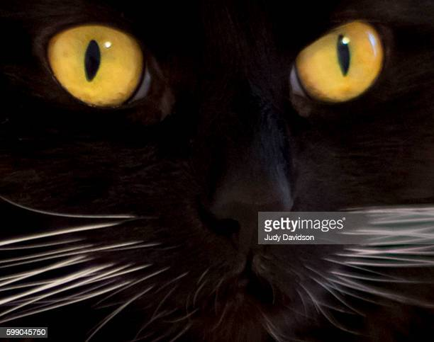 Extreme close-up of black cats face with yellow eyes