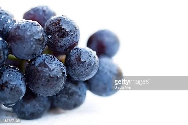 Extreme close-up of blue grape