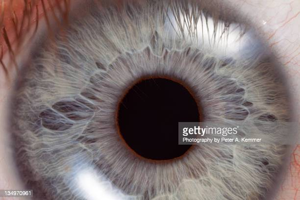 extreme close-up of bright blue eye and iris - extreme close up stock pictures, royalty-free photos & images