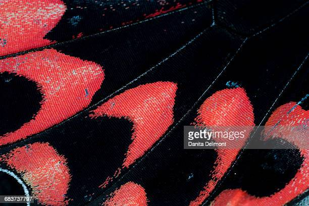 Extreme close-up of butterfly wing pattern