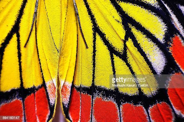Extreme Close-Up Of Butterfly Wing