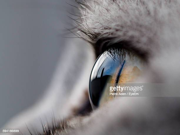 Extreme Close-Up Of Cat Eye