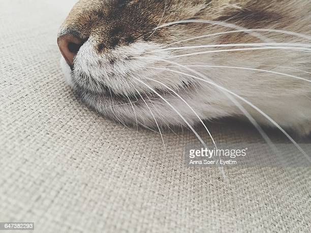 extreme close-up of cat - animal whisker stock pictures, royalty-free photos & images