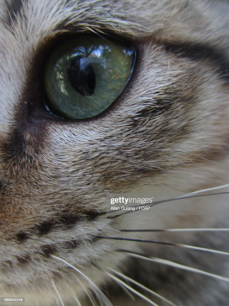 Extreme close-up of cat : Stock Photo