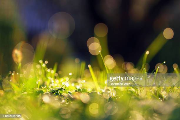 extreme close-up of dew-covered herbs - lush stock pictures, royalty-free photos & images