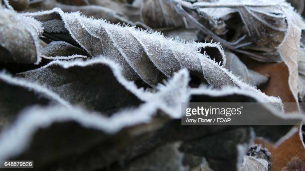 extreme close-up of dry leaf - amy freeze stock pictures, royalty-free photos & images