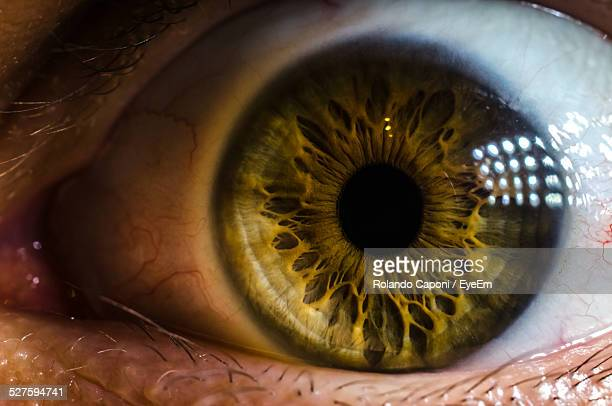 Extreme Close-Up Of Eye