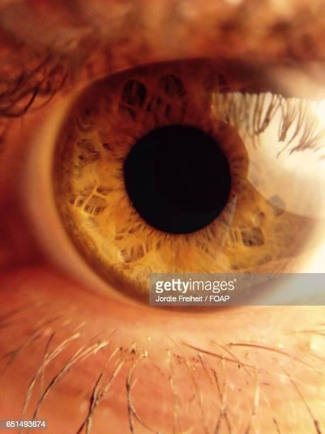 Extreme close-up of eye