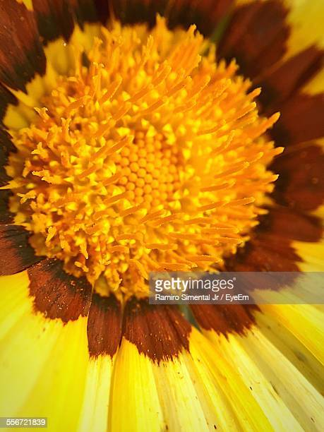 Extreme Close-Up Of Flower Pollen