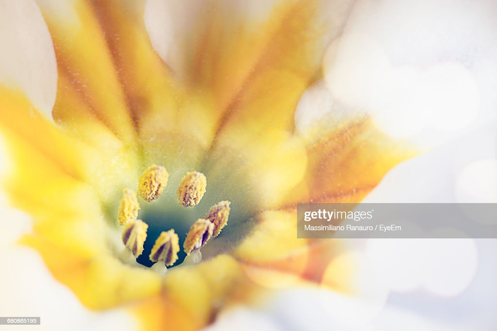 Extreme Close-Up Of Flower Pollen : Stock Photo